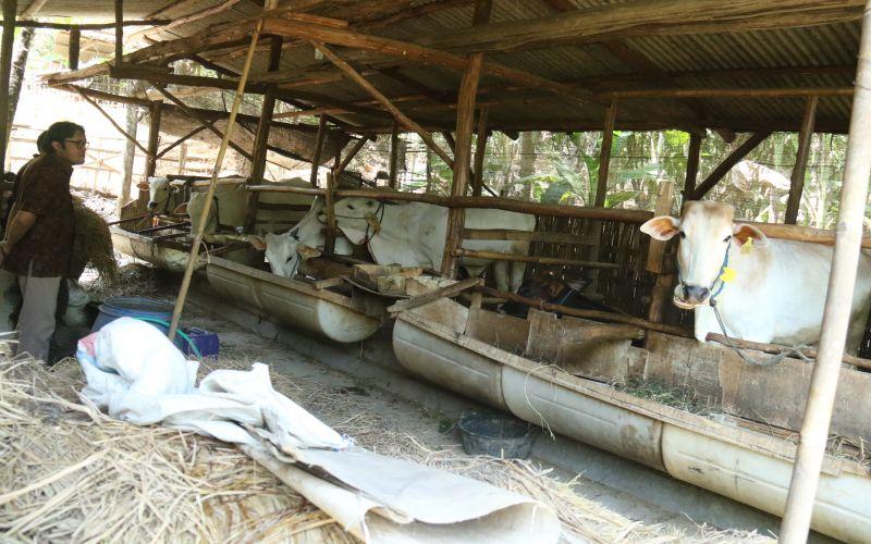Berkunjung ke kelompok penerima bantuan program UPPO desa Arahan - Indramayu