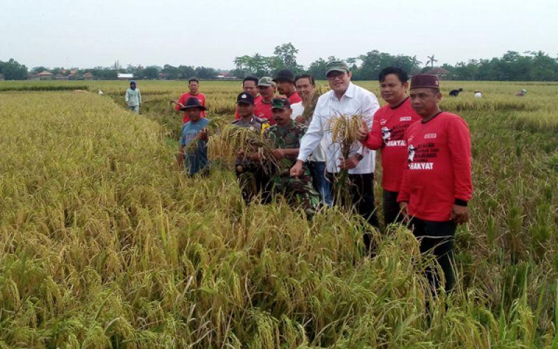 Panen Raya di Kecamatan Tukdana Kabupaten Indramayu